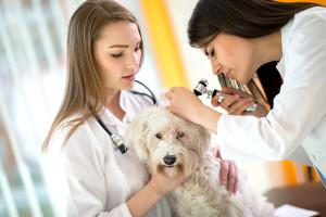Veterinary Healthcare