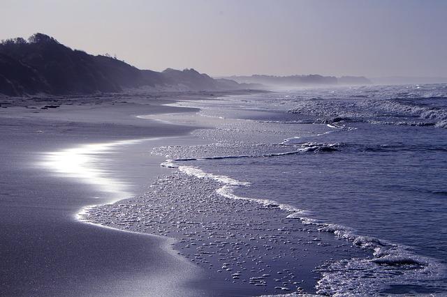 Pacific Beach vet